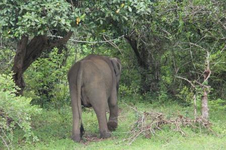 Отдых в Шри Ланке
